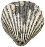 ROMAN REPUBLIC: PB aes formatum (104.11g), uncertain Italian mint, ca. 400-300 BC, cf. ICC pl. 90, 4