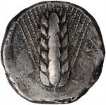 ITALY. Lucania. Metapontion. AR Nomos (8.00 gms), ca. 470-440 B.C. VERY FINE.