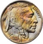 1929-D Buffalo Nickel. MS-66 (PCGS).